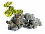 Bonsai auf dem Stein